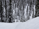British Columbia 2013 - Revelstoke
